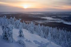 January (stefan.bueti) Tags: sunset snow cold tree ice finland frozen