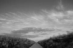straight ahead (rainbowcave) Tags: clouds way path wolken raps feldweg weg rapeseed rapsfelder