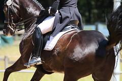 IMG_4516 (dreiwn) Tags: horse pony horseshow pferde pferd equestrian horseback reiten horseriding dressage reitturnier dressur reitsport dressyr dressuur ridingclub ridingarena pferdesport reitplatz reitverein dressurreiten dressurpferd dressurprüfung tamronsp70200f28divcusd jugentturnier