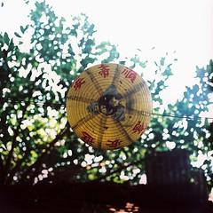 Underside - Kodak EKTACHROME E200 (emulsivefilm) Tags: 120mediumformatfilm 2016august 6x6 crossprocessing ei100 ei200 emulsivedailyphoto expiredfilm iso100 iso200 kodak kodakektachromee200