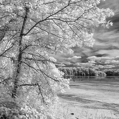Infrared: Potato Creek State Park, Indiana (DannyBurkPhotography) Tags: statepark tree indiana lakeshore infrared potatocreek