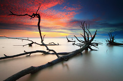 Everything Ends Here (Fakrul J) Tags: ocean life longexposure trees sunset sky cloud seascape fall beach nature clouds canon landscape dead skeleton photography landscapes frozen sticks amazing raw skies seascapes view state dusk no shoreline scenic dramatic deadtree mangrove shore freeze fallen malaysia stick dreamy guardian fallentree selangor guardians deadtrees fallentrees beautifulsunset banting morib selangorstate singleshot nohuman kelanang eos500d pantaikelanang singhrayfilter leefitlers darylbensonreversegrad fakruljamil wwwfakruljamilcom imagewithcolors leeproglass3stop