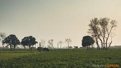 I Love Pakistan (GoCiP) Tags: street trees pakistan sunset summer people sun green photography countryside nikon day streetphotography photojournalism fields lahore sunnyday summerday gocinematic d7000 nikond7000 gocip zeeshangondal