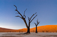 Deadvlei 1 (Gies! (back home, trying to catch up)) Tags: landscape sossusvlei deadvlei namibie