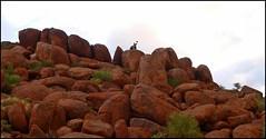 on the rocks (tor-falke) Tags: africa rock african ngc safari afrika namibia afrique felsen namib namibie africalandscape torfalke flickrtorfalke