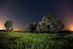 Broken (raul_lg) Tags: sky espaa tree night canon stars landscape arbol noche spain paisaje murcia cielo estrellas nocturna largaexposicion canon15mmfisheye raullopez solarforce raullg mulabullas