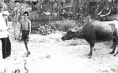 Ag Extension Officer and Farmer (Gene Whitmer) Tags: vietnamese farm farmer 1972 agteam