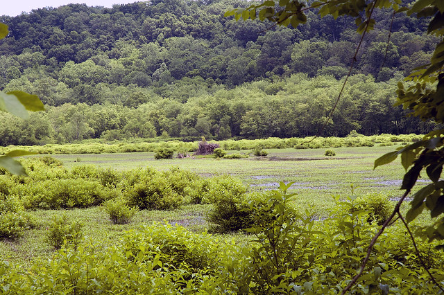 North Fork Waterfowl Resting Area - June 2013