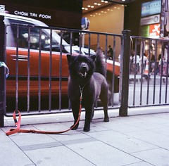 hello blackie (Gregory Wu) Tags: film ic kodak ikoflex hong kong f35 75mm tessar