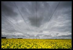 Electricite dans l'air (Zenith_01) Tags: france landscapes campagne paysages colza