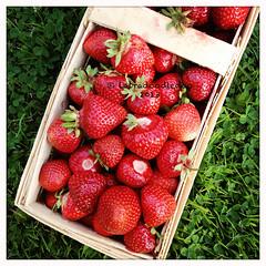 Week 27: Strawberry Basket (labradoodledoo) Tags: food grass germany bayern deutschland bavaria und yummy essen strawberry basket strawberries delicious trinken garten erdbeere erdbeeren