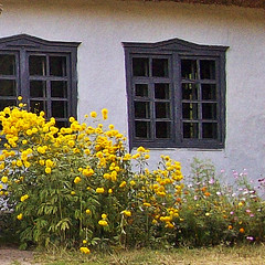 100_0510 (Osyam-osyam) Tags: flowers windows summer sun white plant green nature grass wall digital 22 village view flowerbed botany