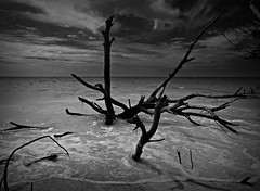 Longboat Key (Postcards From The Edge Photography) Tags: wood sea sky bw sand surf florida olympus driftwood longboatkey omdem5