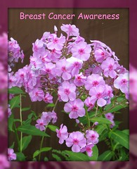 """Take care! Be Aware!"" (ellenc995) Tags: pink friends october ribbon awareness bca ruby3 coth supershot fantasticnature akob abigfave citrit rubyphotographer 100commentgroup challengeclub coth5 hennysgardens naturallywonderful ruby10 thesunshinegroup sunrays5 challengeclubchampion"