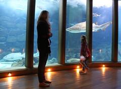 Aquarium Finisterrae (Suso Vilanova) Tags: galicia acoruña aquariumfinisterrae