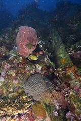 Liberty Wreck (Ben Naden) Tags: bali indonesia landscape wreck