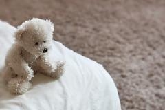 hugs & cuddles (kelxkel) Tags: bear cute home toy bed bedroom hug friend soft teddy cuddly cuddles hold