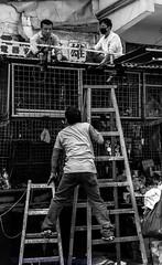 Balancing Act (Keith Mulcahy) Tags: people blackandwhite hongkong daylight streetphotography worker ladder kowloon tst shamshuipo canon2470mmf28 canon5dmk3 keithmulcahy blackcygnusphotography ppa7a0 ppd56c