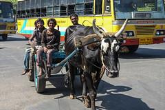 Oxcart (MauricioMoura.com) Tags: india animal bullock bangalore places bull ox cart inde bengaluru