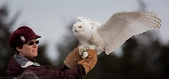 Snowy Owl release 3 (krisinct- Thanks for 12 Million views!) Tags: nikon snowy sigma os 150 owl 500 d7100