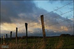 PhM-Clture de la journe (Philippe Em) Tags: france soir paysages meuse barbels clture