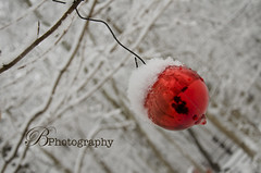 Truly Winter (BPhotography_) Tags: road christmas new trees winter red snow cold love home midwest like ornament years blizzard facebook 2014 bphotography