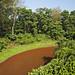 Chitwan Pool Vertorama