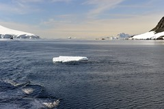 Neumayer Channel, Antarctica 2014 (Easy Traveler) Tags: antarctica neumayerchannel