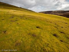 Fields at Hordron (Roger B.) Tags: unitedkingdom grassland grazing barnsley southyorkshire westernmoorslws rabbitlawn