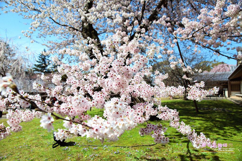 2014-04-01-14h03m27IMG_1418