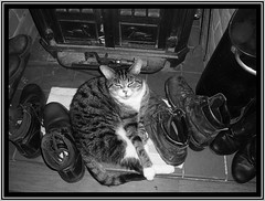 Cat Among the Boots (Margaret Edge the bee girl) Tags: winter kitchen cat warm boots stove hearth greyscale scuttle