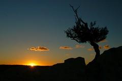 erste Sonnenstrahlen (rosch2012) Tags: morning arizona sky usa sun tree pine backlight clouds sunrise early horizon himmel wolken beam sonne sunbeam baum horizont gegenlicht morgens silhuette grandcanyonnp pinie frhmorgens wlkchen sonnenaufuntergang talkante