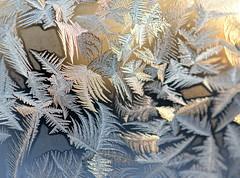 today (joy.jordan) Tags: winter light home window sunrise poetry frost bokeh icecrystals
