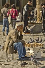 Thinking of life (Aisha Altamimy) Tags: chair feeding sultan doves ayub