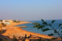 Overlooking Paradise (pat94oc) Tags: ocean flowers beach yellow golden algarve albufeira