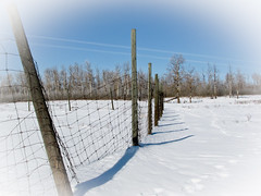 Winter Fence Line (Clay Dye) Tags: winter snow canada ab alberta sherwoodpark hff elkislandnationalpark contails canonpowershotsx10is happyfencefriday