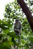 Watcher of the forest [Bali, Indonesia] (Melvinia_) Tags: bali green nature animal indonesia 50mm grey gris monkey bokeh vert ubud singe macaque monkeyforest indonésie canoneos450d digitalrebelxsi