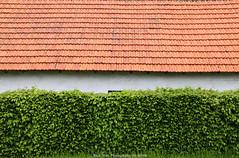 Lines (Rick & Bart) Tags: lines canon garden tuin stable rickbart sintlambrechtsherk rickvink eos70d