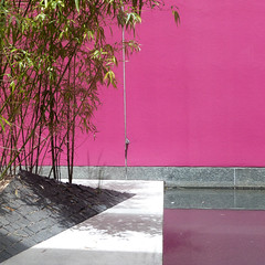 shocking pink and scrappy bamboo (msdonnalee) Tags: pool bamboo pinkwall bamboogarden