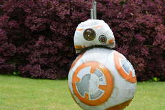 My new best friend! (146:366) (Lost Star) Tags: starwars balloon bb8 day146366 366the2016edition 3662016 25may16
