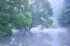 water tree reflection (nakashy) Tags: reflection tree nature beautiful japan fog canon landscape pond canoneos5dmarkiii