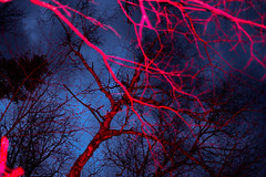 Digital - Vgtal 2/3 (francois ollivier) Tags: blue trees light red sky canada nature modern night landscape visions bright quebec contemporary flash low francois vegetal strob ollivier ifyouleave francoisollivier moderntart oftheafternoon
