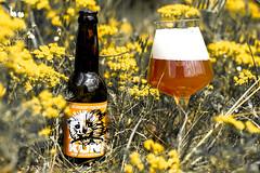 DSC_7944 (vermut22) Tags: beer bottle beers brewery birra piwo biere beerme beertime browar butelka