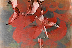 Sliding a Fuchsia ;o) (Elisafox22 slowly catching up ;o)) Tags: red flower green leaves photomanipulation photoshop patterns shapes fuchsia textures photomanipulated postprocessing hss ipad sliderssunday mokuhangahd elisafox22 elisaliddell©2016