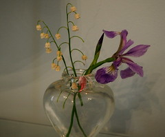 Flowers and shadows (pilechko) Tags: flowers light color shadows indoors vase