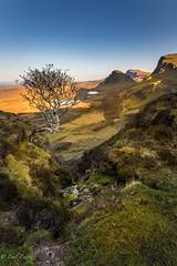 The Quiraing, Isle of Skye (Paul S Ewing) Tags: sunset colour tree skye landscape scotland isle