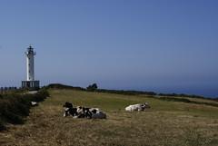 _DSC2781 (kroliver75) Tags: relax faro paz asturias lastres vaca serenidad farodelastres