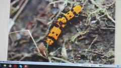 DSC07503 (yongheecs永和社大生態保育社) Tags: 林場
