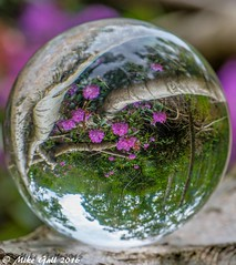Woods 3 (crusha5050) Tags: flower woodland crystalball crystal ball reflection bokeh depthoffield greatfen holme