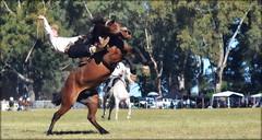 Ariztegui, el hijo (Eduardo Amorim) Tags: horses horse southamerica argentina criollo caballo cheval caballos cavalos pferde herd cavalli cavallo cavalo gauchos pferd ayacucho chevaux gaucho cavall  amricadosul gacho amriquedusud provinciadebuenosaires  gachos  sudamrica suramrica amricadelsur sdamerika crioulo caballoscriollos criollos jineteada  tropillas buenosairesprovince americadelsud gineteada tropilhas tropilla crioulos cavalocrioulo americameridionale tropilha caballocriollo eduardoamorim cavaloscrioulos